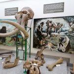 Studijska poseta Pokrajinskom zavodu za zaštitu prirode